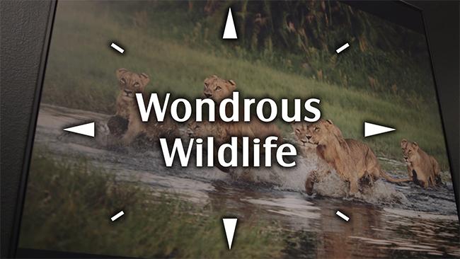 Wondrous Wildlife Logo
